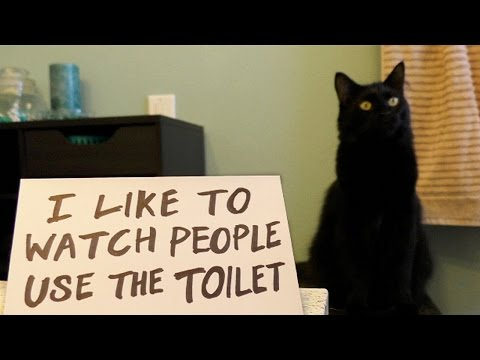 Ultimate Cat Shaming!