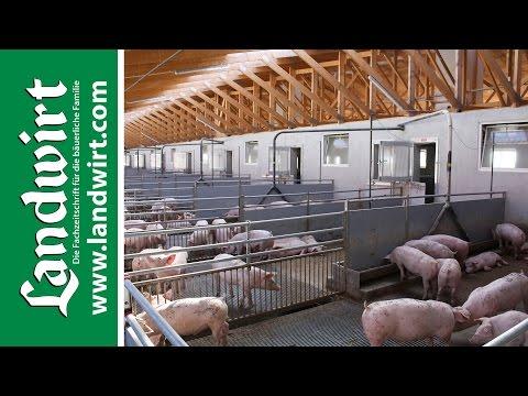 Tiergerechte Stallkonzepte für Schweine | landwirt.co ...