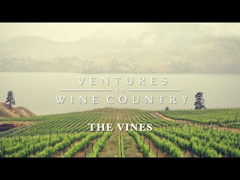 Ventures in Wine Country   Episode 1: The Vines