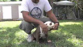 Dog Training : How To Stop Your Puppy From Biting