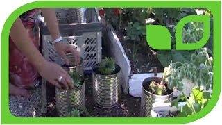 #1333 Sabine Rebers Gartentipp - Recycling bei Pflanztöpfen und Pflanzkübeln