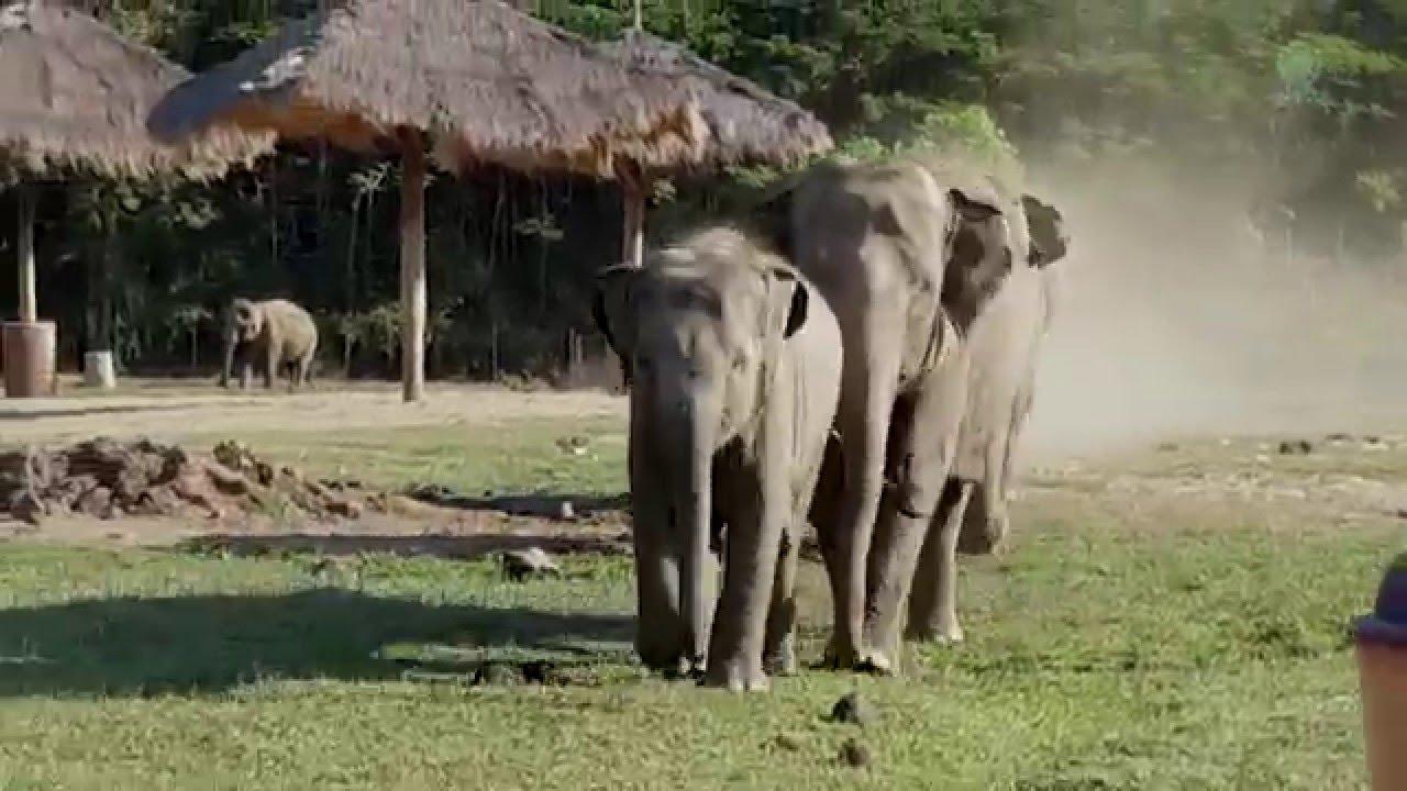 Krdo slonova koje voli jednog čoveka