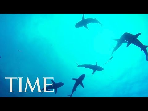 No, Sharks Will Not Attack You During A Hurricane According To Experts   TIME