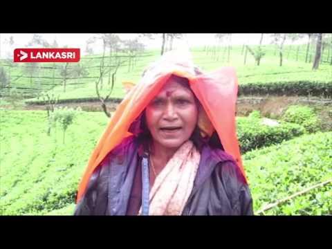 Struggle-of-Tea-Plantation-Workers-in-Upcountry-Srilanka