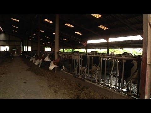 Le mauvais temps perturbe aussi les vaches laitières - 27/05