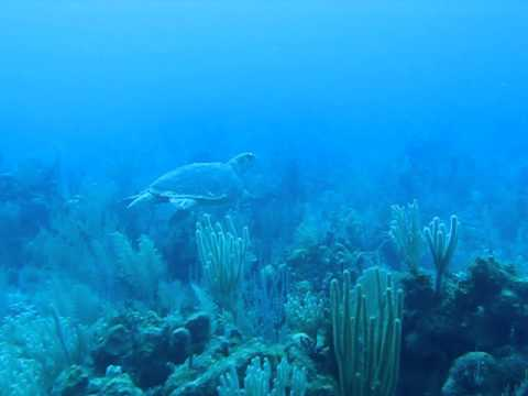Belize Diving - Sea Turtle on tour with Robert's Grove Beach Resort