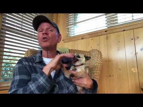Koiran silittäminen rentouttaa ja poistaa stressiä