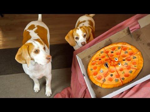 Dogs vs Talking Pizza Prank