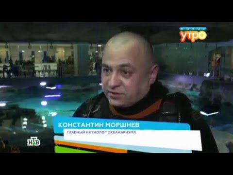 Телеканал НТВ в океанариуме «Москвариум» (видео)