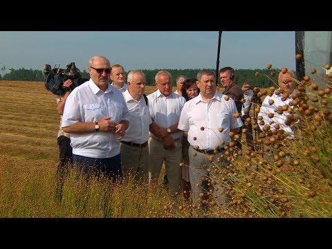 'Рентабельность не хуже, чем у нефти' - Лукашенко видит резервы для роста эффективности льноводства