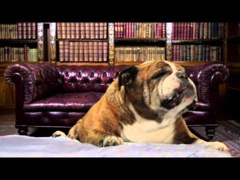 buon compleanno cantato...da cani!
