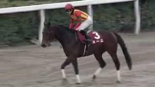 2011年兵庫ゴールドトロフィー