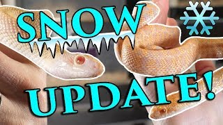 Baby Snake Update!! by Snake Discovery