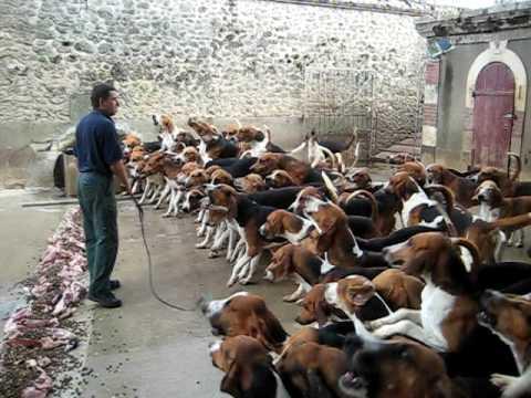 一次餵上百隻獵犬是什麼畫面?網友全看傻