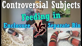 Con-Sub: Feeding in the Enclosure vs Separate Bins by Snake Discovery