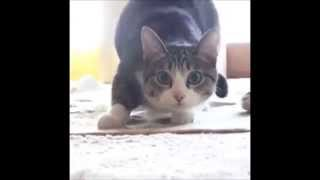 Cat and dog wiggle dance - YouTube