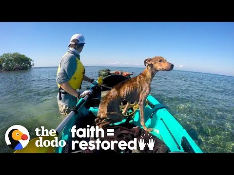 This Dog Was Left on a Deserted Island, Until...