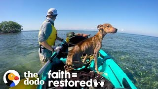 Dog on Remote Island  Near Belize is Rescued and Brought Home | The Dodo Faith = Restored by The Dodo