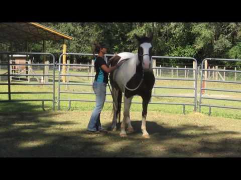 Sadie at Panhandle Equine Rescue; Session I
