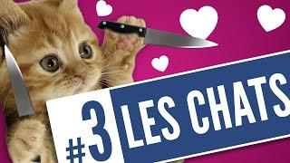 "Video ""Selon une étude"" : les chats (#3) MP3, 3GP, MP4, WEBM, AVI, FLV Oktober 2017"