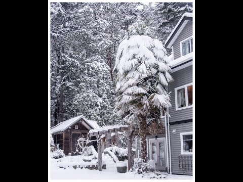 """Snowy Palm trees with  Nearly 7"""" inches of snow on the ground"""
