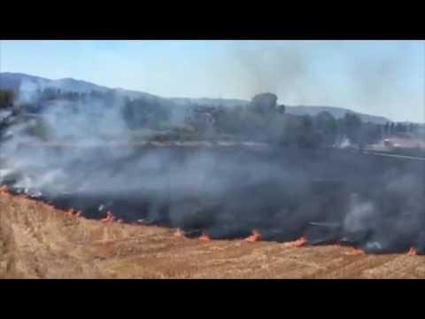 Incendio a Riotorto: le fiamme minacciano la ferrovia