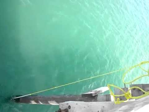 48″ Cobia caught on Gotcha Plug – Avon Pier, NC