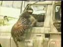 Atak leoparda