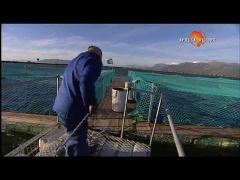 www.africareport.com video – Trout farmers, South Africa