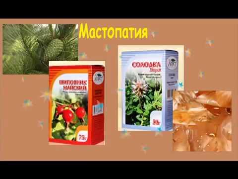 Мастопатия. лечение мастопатии народными средствами и методами болезни груди народные методы лечения