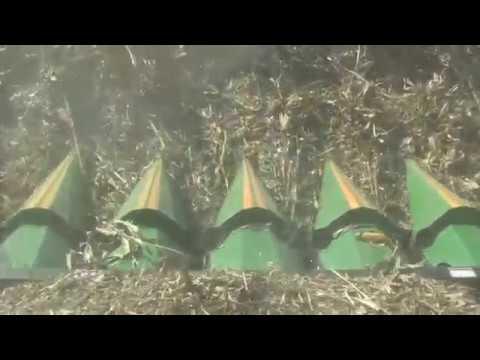Drago Corn Heads   Harvesting Down Corn