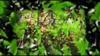 TRAPEZOIDE - Mestiza