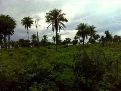 Fazenda no municipio de Estreito.