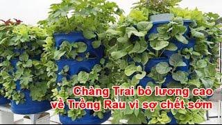 Chàng Trai bỏ lương cao về Trồng Rau vì sợ chết sớm Mô hình tháp rau - mô hình trồng được số lượng lớn cây trên một diện tích nhỏ và đặc biệt là không cần bó...