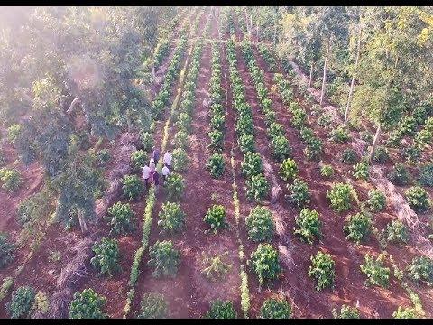 Hiệp định thương mại tự do Việt Nam – EU: Các cam kết quan trọng trong lĩnh vực nông nghiệp