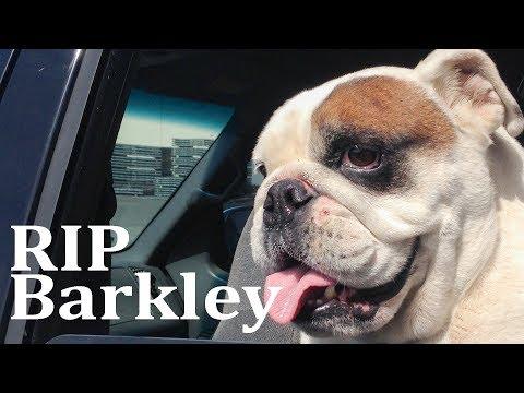 RIP Barkley