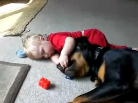 cuccioli che giocano...