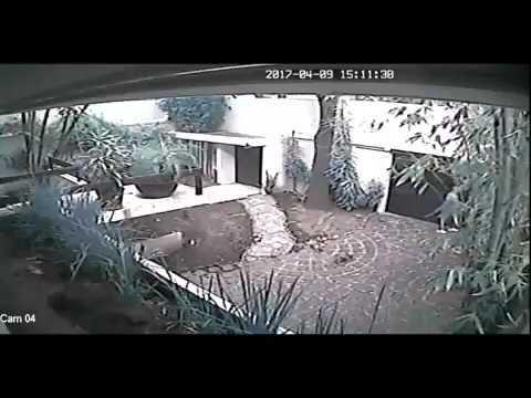 Asaltan casa en la colonia Del Valle de la Ciudad de México y se llevan hasta el perro