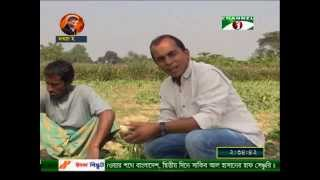 Low market price leads to vegetable waste on field.