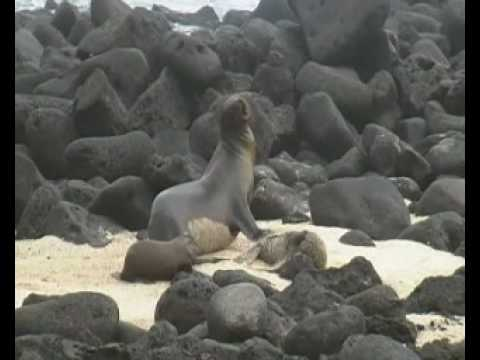 Islas Galapagos (Isla San Cristobal) Ecuador