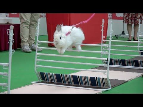 ぴょんぴょん!!うさぎ跳ねるラビットホッピング@うさフェスタ春2019桜祭
