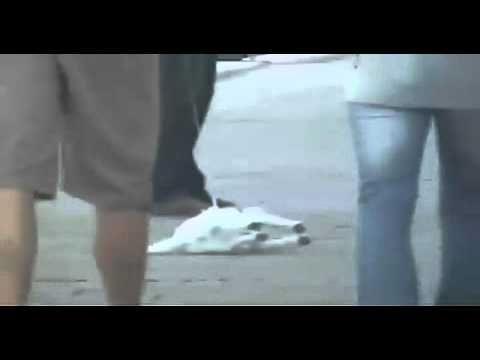 「[ペット]お散歩中、とにかくゴロンとなっちゃう怠惰な犬。」のイメージ