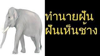 ฝันเห็นช้าง หรือฝันเหà...