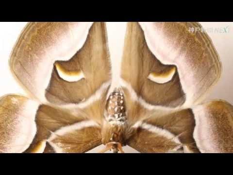 beautiful insects 虫顔図鑑