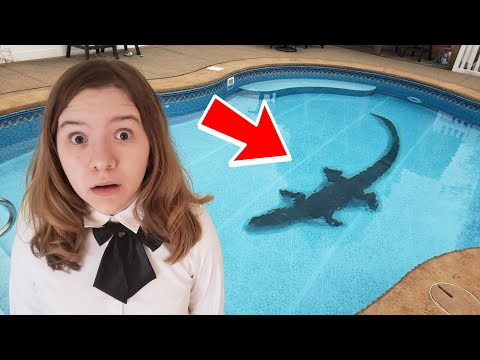 ALLIGATOR IN OUR POOL!