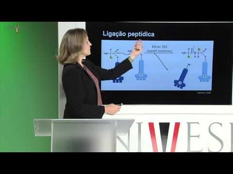 Células e Tecidos - aula 09 - Síntese Proteica (Eucariota)