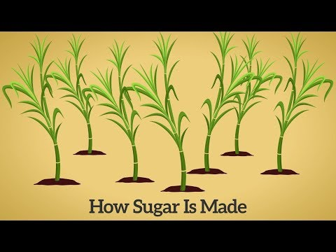 How Cane Sugar Is Made - Step by Step Process