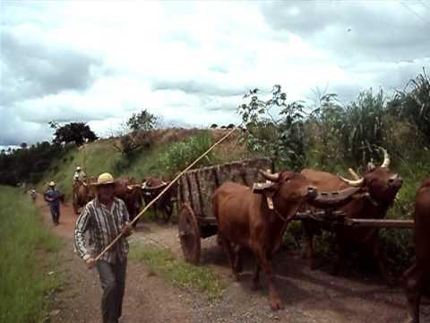 festa de carro de boi em areado minas gerais