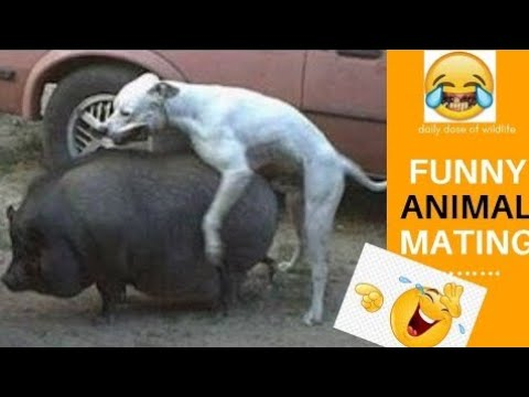 Animal mating compilation 2020