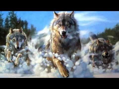 The Legend of the Great White Wolf
